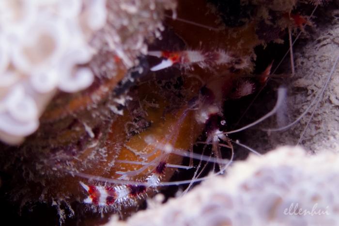 underwater world (10)