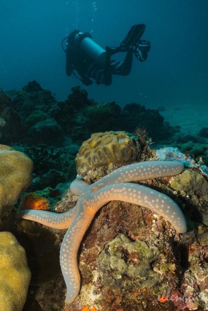 underwater world (2)