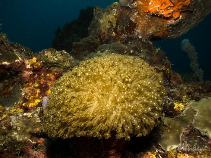 underwater world (5)