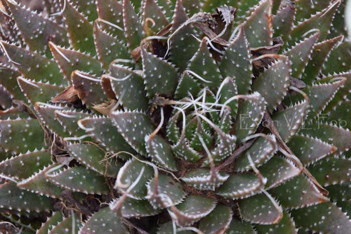 victor's green house - desert garden (77)