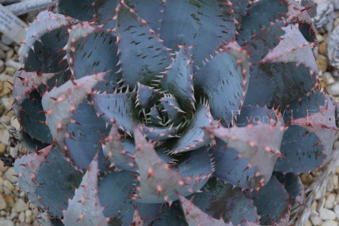 victor's green house - desert garden (78)