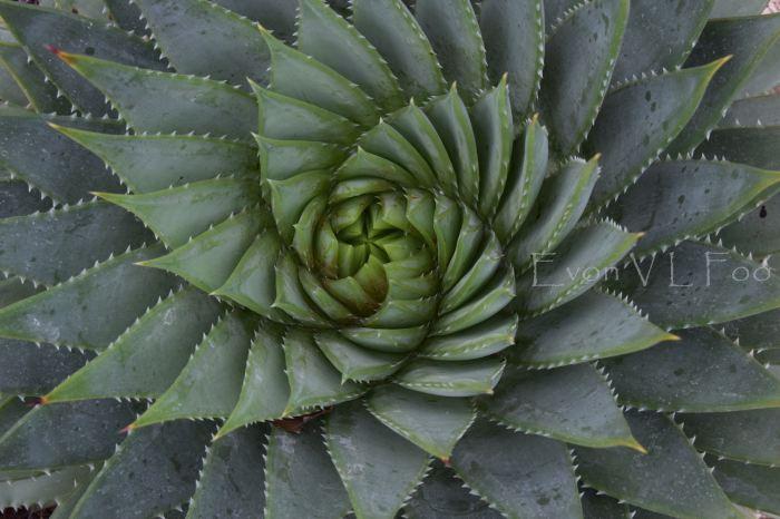victor's green house - desert garden (83)