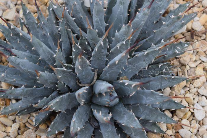 victor's green house - desert garden (91)