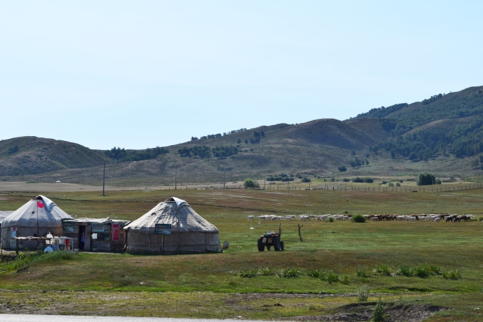 grassland with Kazakh's yurt houses and animals in a distance... yurt house - 氈房, 又名哈薩包, 是哈薩克族人遠祖以來的住房