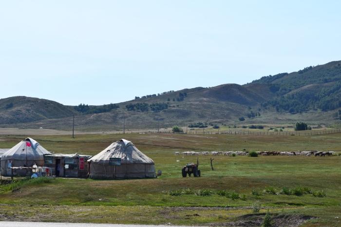 grassland with Kazakh's yurt houses and animals in a distance... yurt house - 氈房, 又名哈薩包, 是哈薩克族人遠祖以來的住房