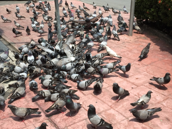 took a colleague out for lunch to celebrate her birthday and saw these on the street... I jokingly told her that we do not need to go to Trafalgar Square in London to see the pigeons... :)