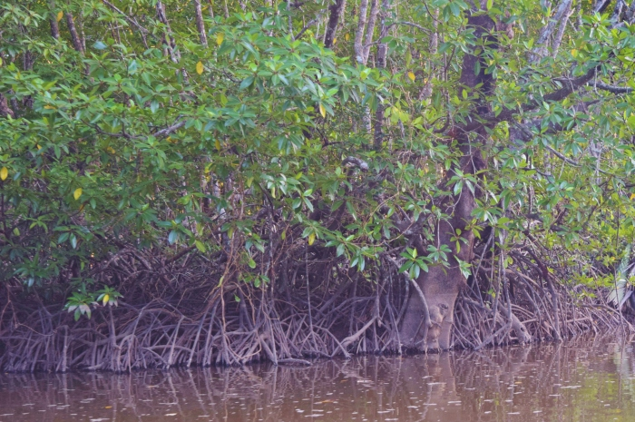 close up of the mangroves