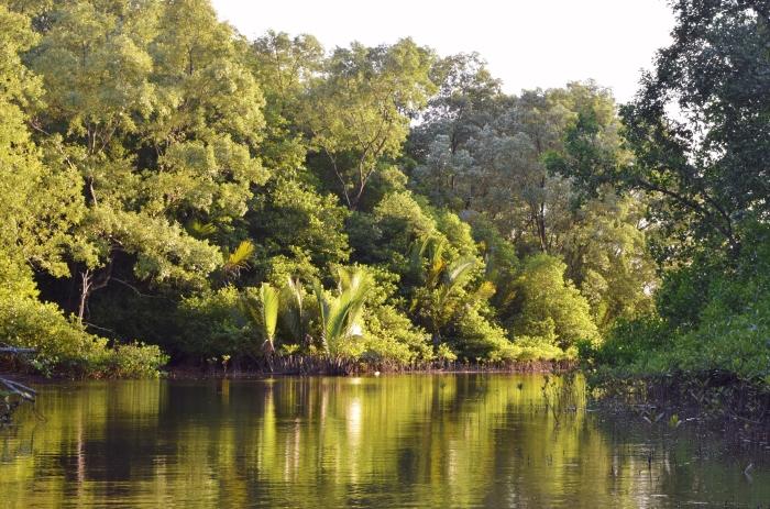 mongrove boat ride (5)