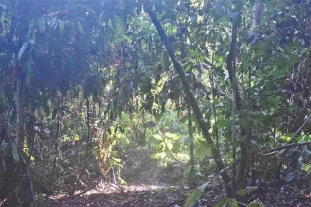 tabin wildlife reserve (16)