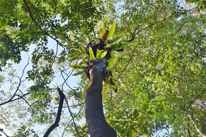 tabin wildlife reserve (21)