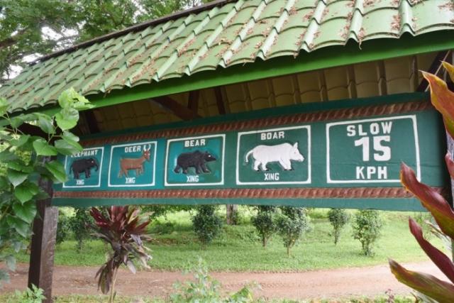 tabin wildlife reserve (3)