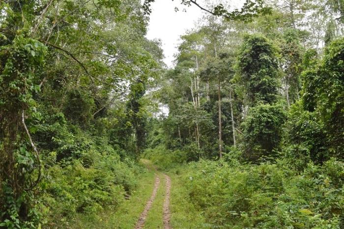 tabin wildlife reserve (30)
