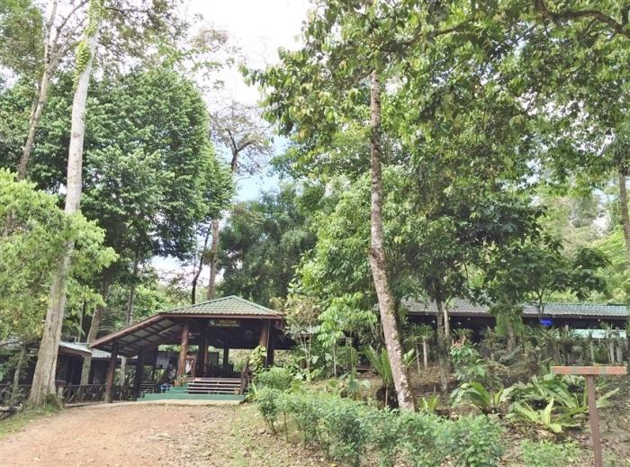 tabin wildlife reserve (4)