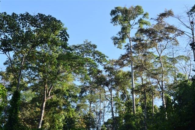 tabin wildlife reserve (42)