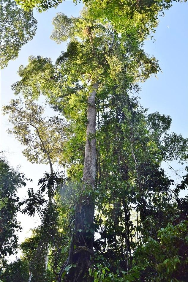 tabin wildlife reserve (43)