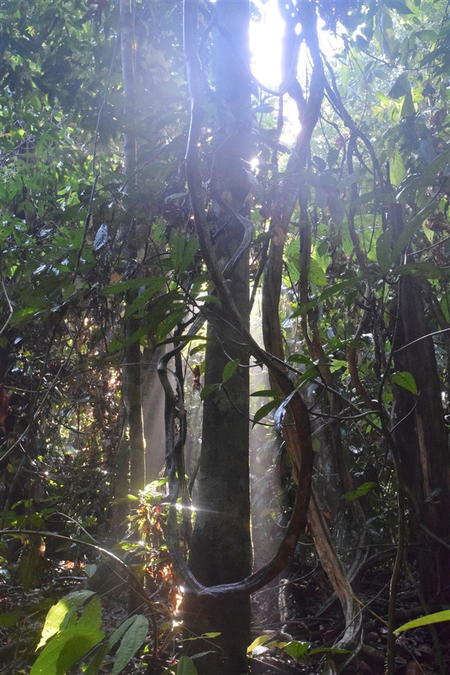 tabin wildlife reserve (45)