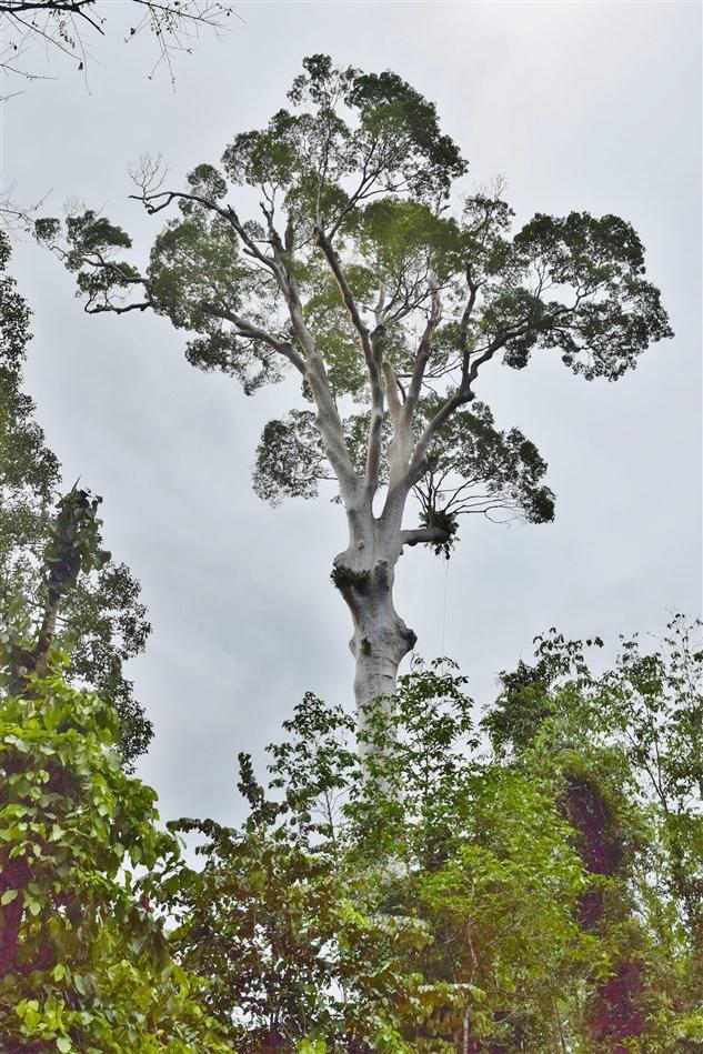 tabin wildlife reserve (47)