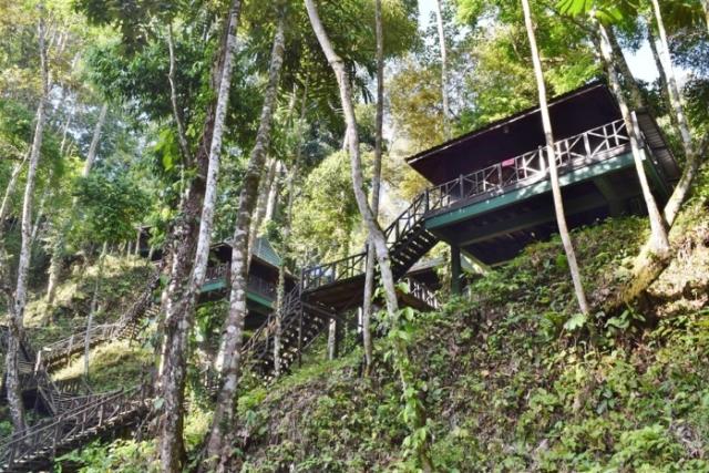 tabin wildlife reserve (9)