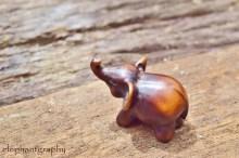 a-lone-elephant