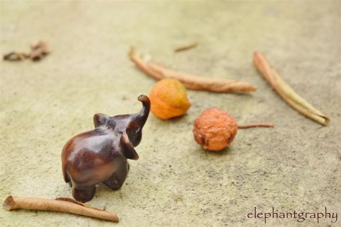 1-elephantgraphy