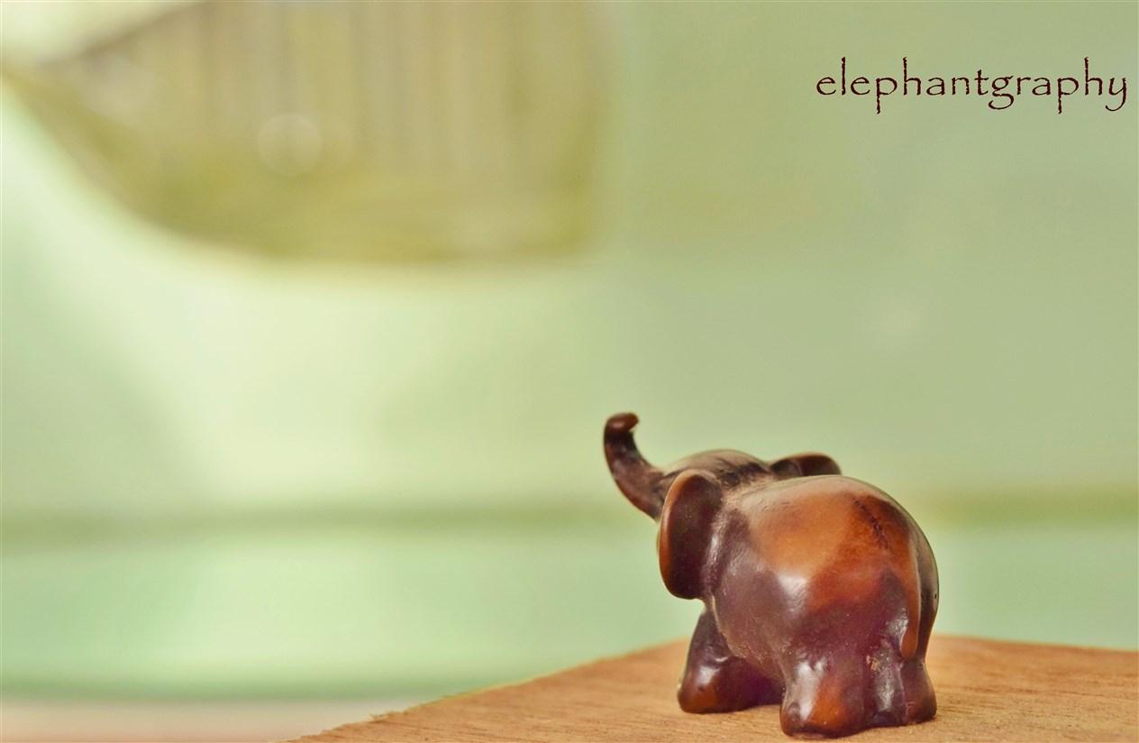 11-elephangraphy