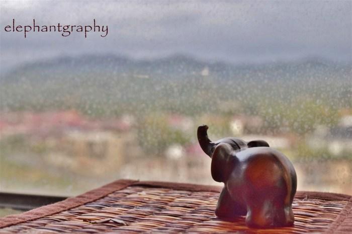 12-elephantgraphy
