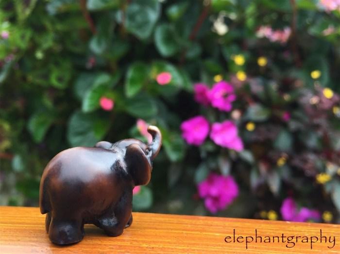 13-elephantgraphy