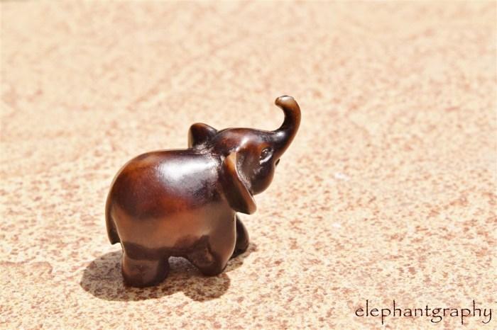 14-elephantgraphy