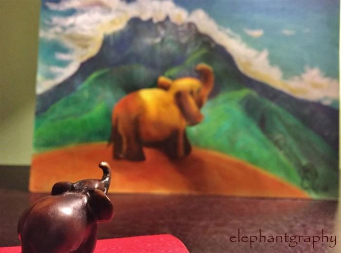 15-elephantgraphy