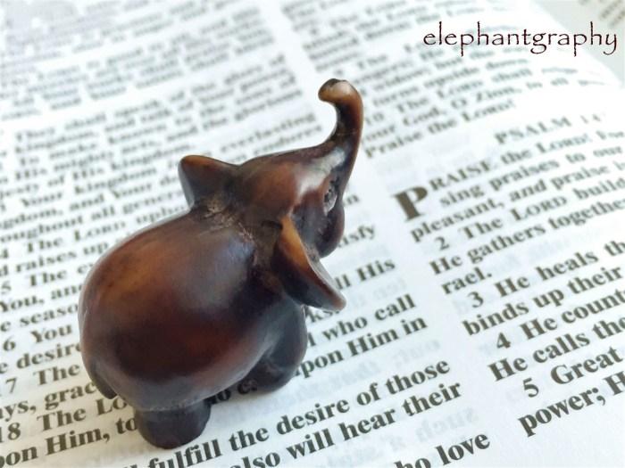 10-elephantgraphy