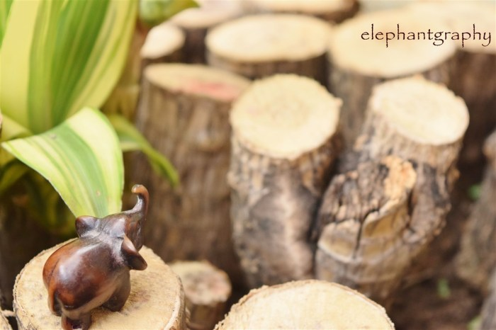 2-elephantgraphy