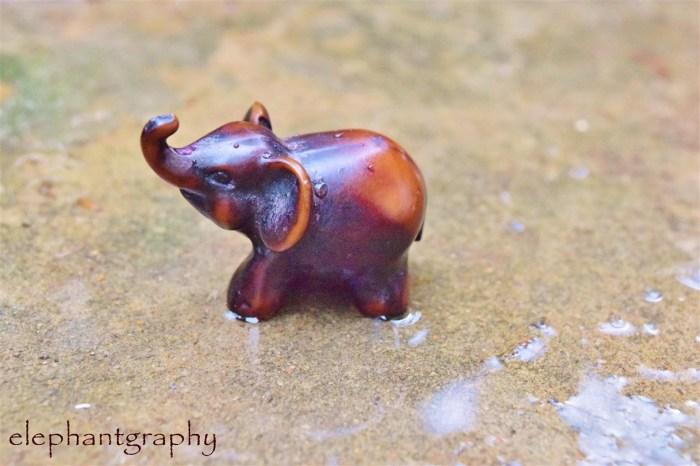 4-elephantgraphy