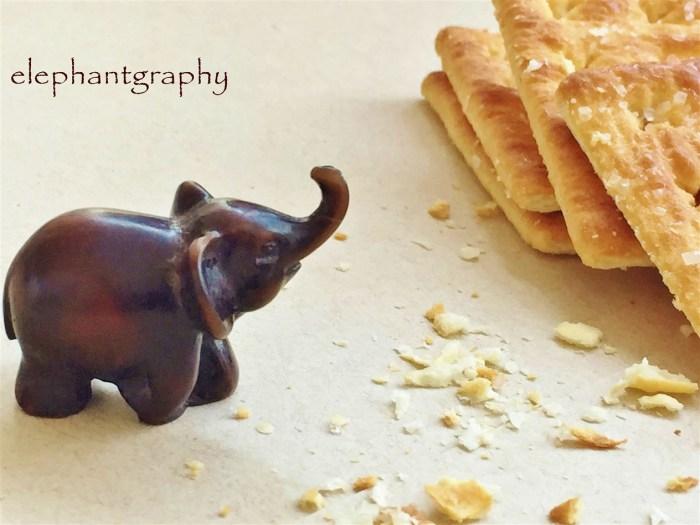 8-elephantgraphy