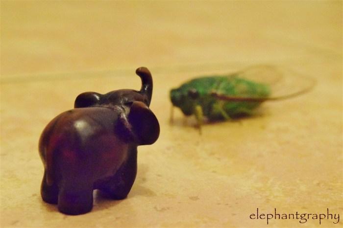 6-elephantgraphy