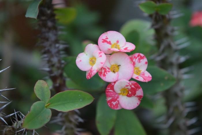 christ-plant-love