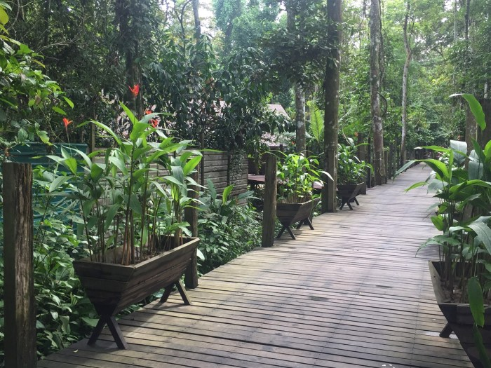 sukau rainforest resort (7)