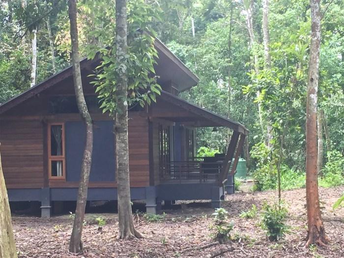 sukau rainforest resort (8)