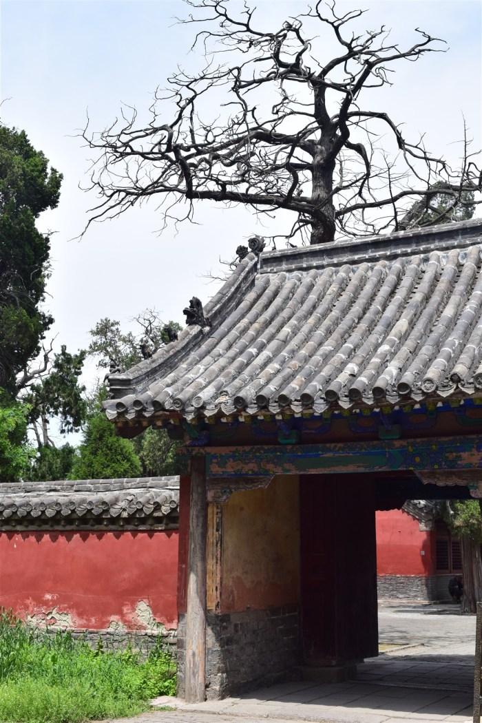qufu shandong china (24)