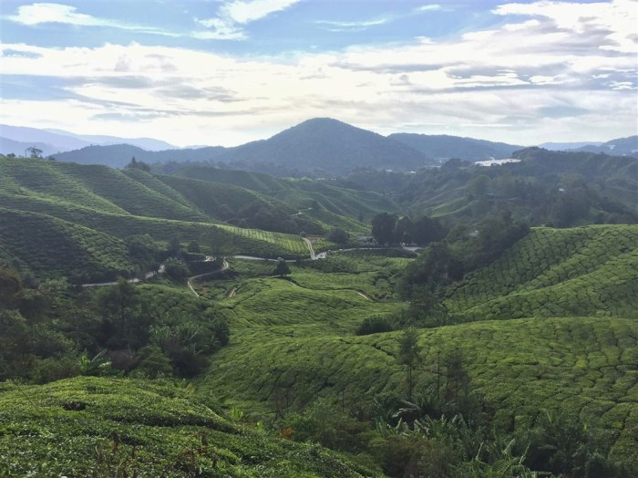 travel blog, trip to cameron highlands