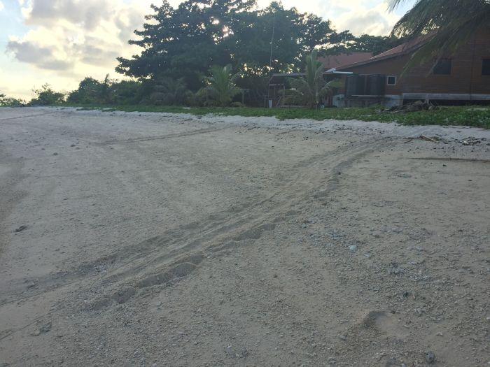 trip to selingan island sandakan (16)