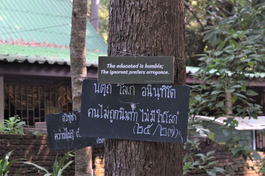 chiang mai, chiang ami talking tree, Wat Umong
